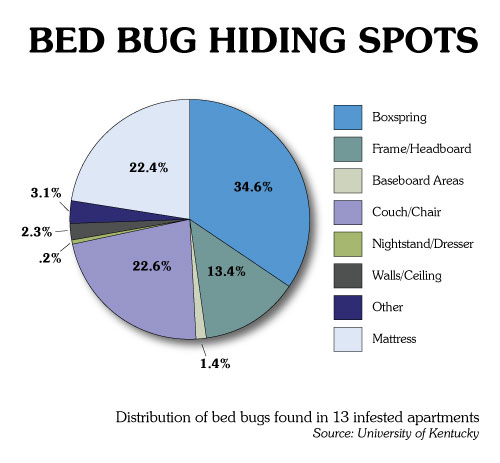 Bed Bugs 101 We Make Bugs Dead